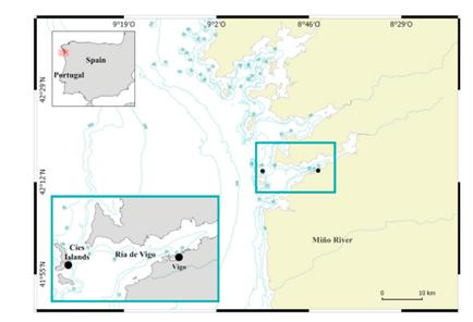 Emplazamientos de muestreo situados en la Ría de Vigo. Imagen: IEO