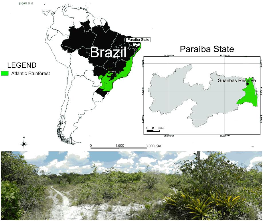 Bosques de Brasil. Imagen: RJB