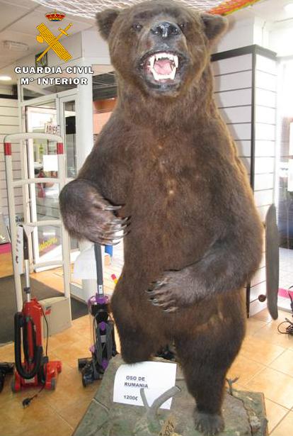 El oso pardo naturalizado intervenido por el Seprona. Imagen: Comandancia de la Guardia Civil  de Albacete.