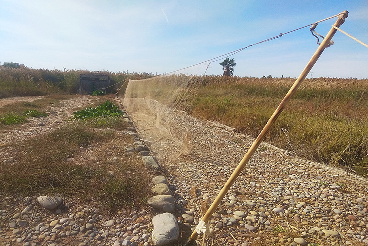 Un enfilat activo, en Plana Baixa. Imagen: CABS