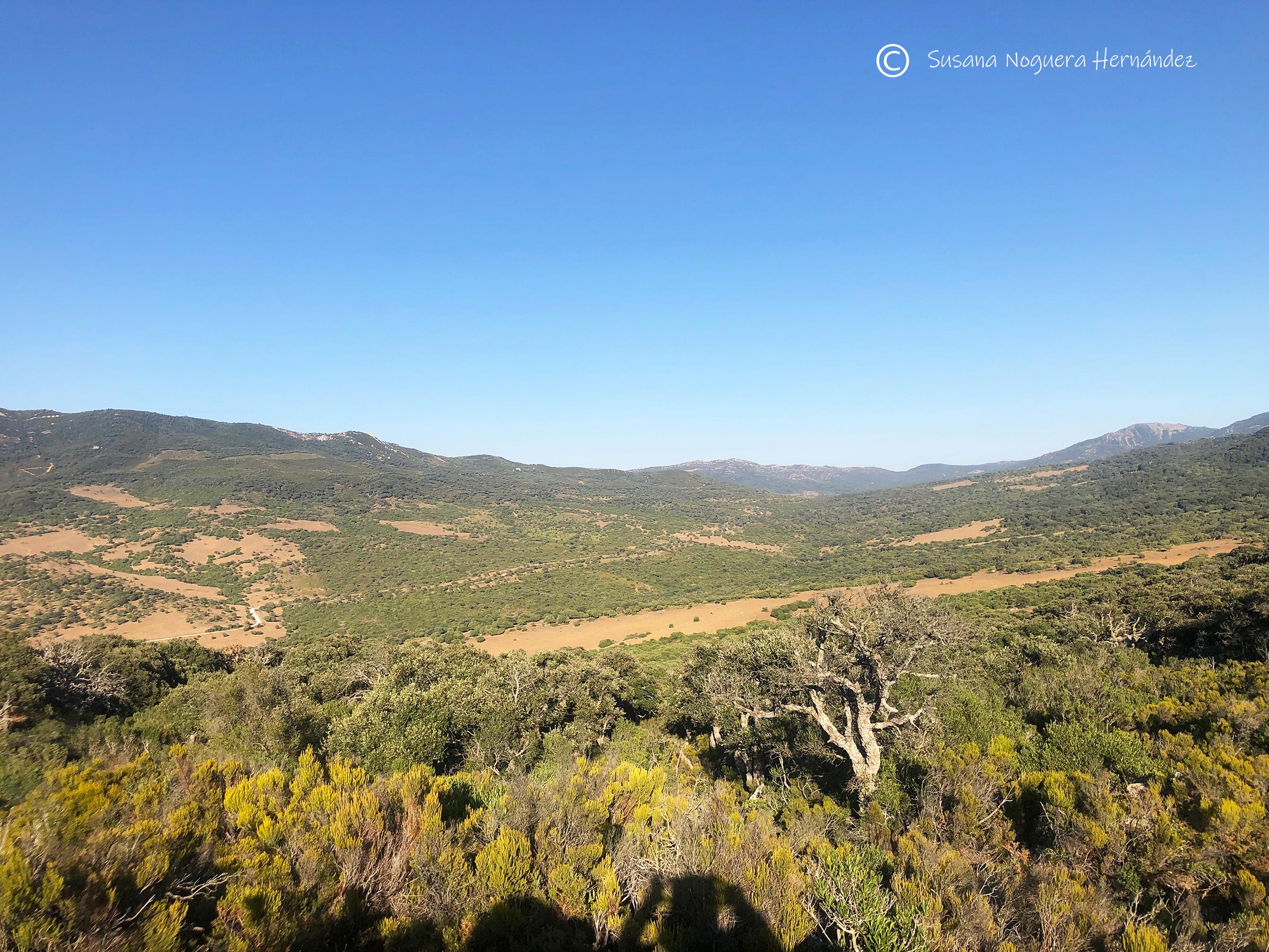 Parque Natural de Los Alcornocales, uno de los parajes donde se producen 'tapones de aves'. Imagen: Susana Noguera
