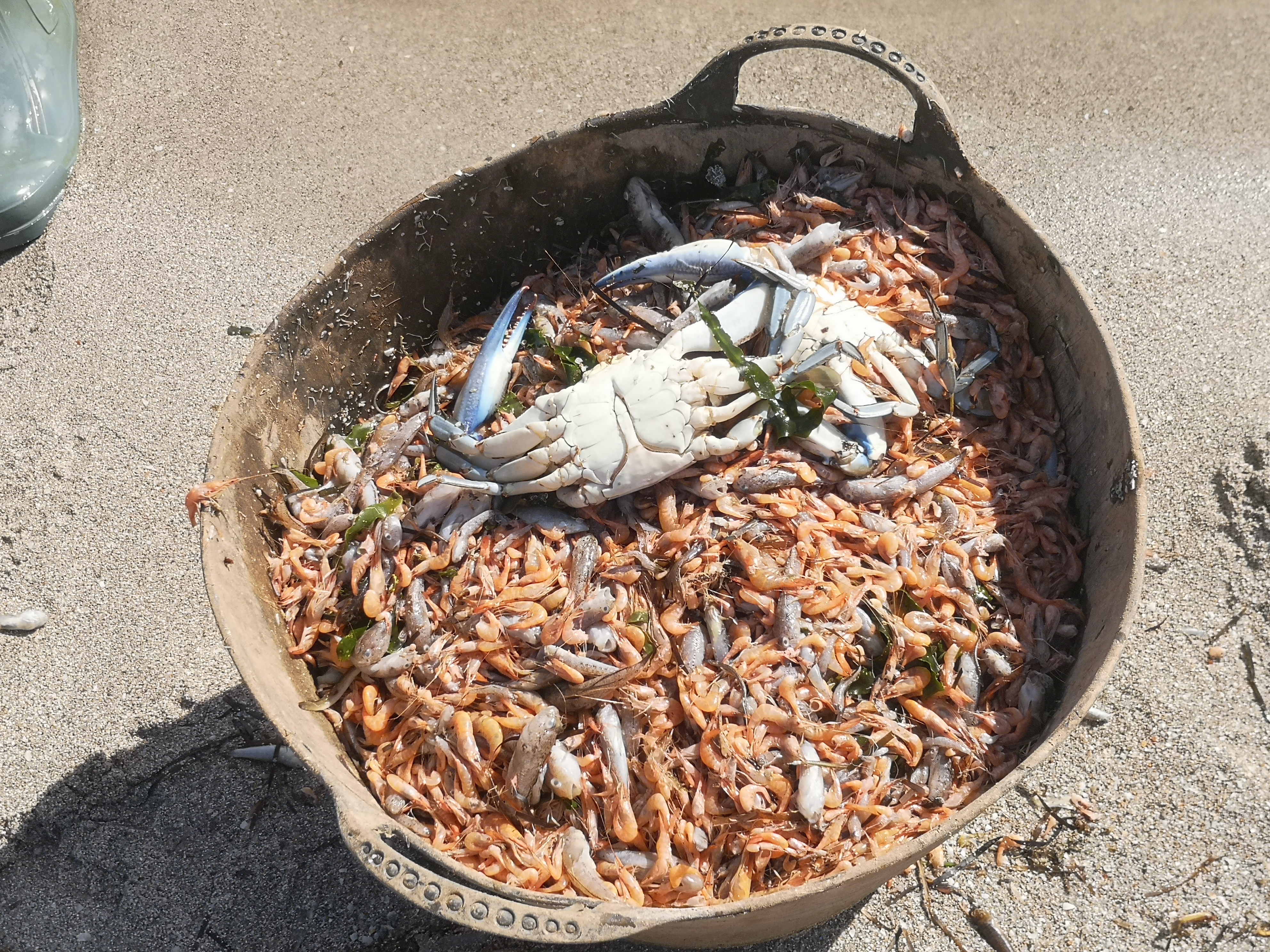 Un cesto con peces, langostinos y el resistente cangrejo azul, muertos por las condiciones de la laguna regional. Imagen: EEA