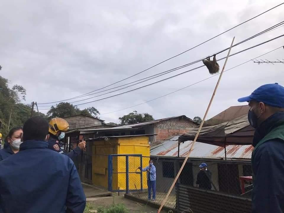Hizo falta una escalera. Imagen: Corporación Autónoma Regional del Valle del Cauca (CVC)