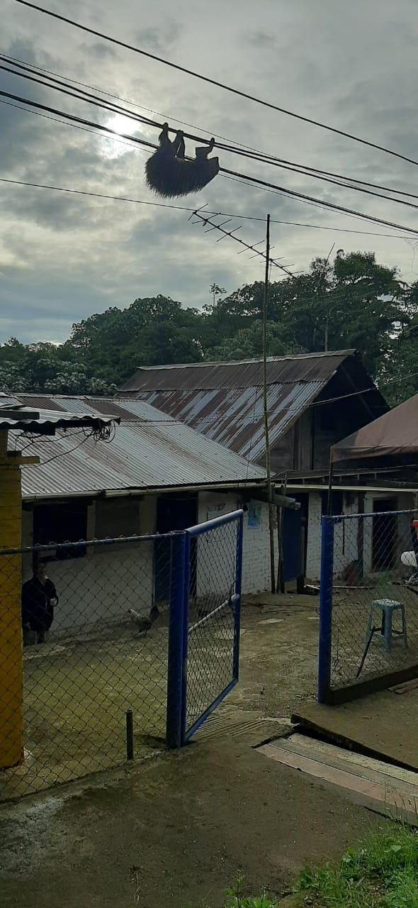 El barrio donde se halló al ejemplar. Imagen: Corporación Autónoma Regional del Valle del Cauca (CVC)