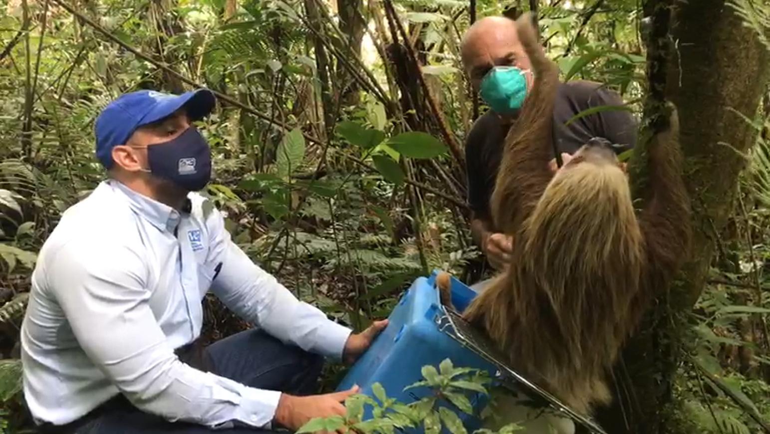 Un momento de la liberación, recogida en un vídeo. Imagen: Corporación Autónoma Regional del Valle del Cauca (CVC)