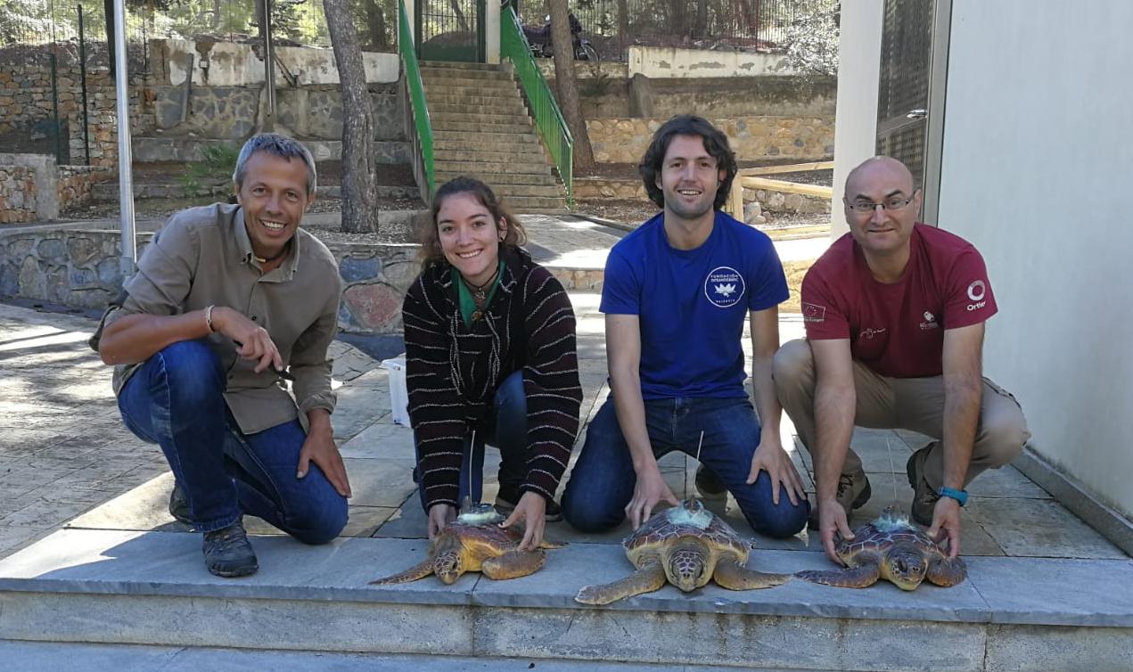 Personal de la Fundación Oceanogràfic, la UPV y del Centro de Recuperación de Fauna Silvestre de El Valle que han realizado el marcaje. Imagen: Oceanogràfic