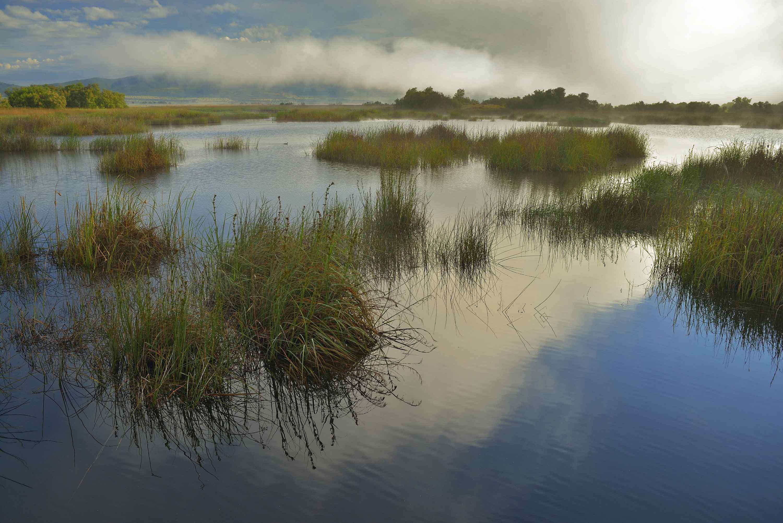 Un humedal. Imagen:  Jorge Sierra / WWF
