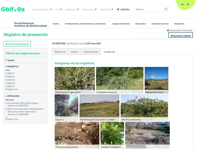 La nueva versión del Portal Nacional de Datos de Biodiversidad GBIF.ES permite el almacenamiento, búsqueda y visualización de imágenes u otros objetos multimedia. Imagen: RJB-CSIC