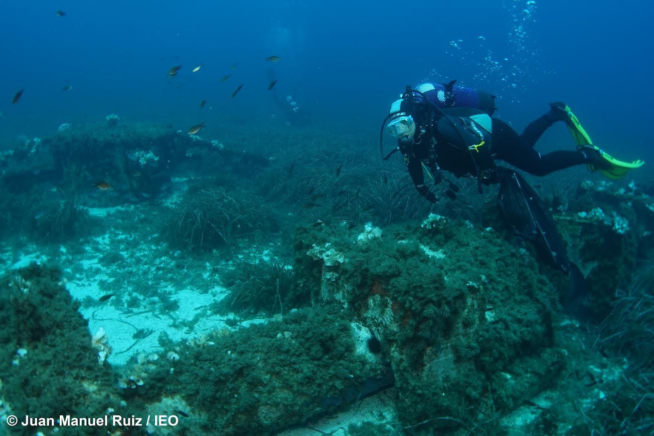 Un buceador, sobre un ecosistema de praderas submarinas. Imagen: Juan Manuel Ruiz / IEO