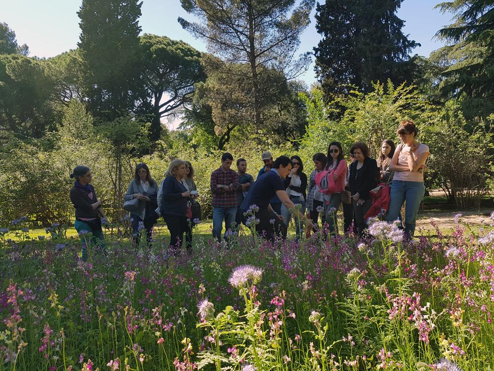 Visita guiada a la pradera ornamental, celebrada hoy coincidiendo con el Día Internacional de la Fascinación por las Plantas. Imagen: RJB