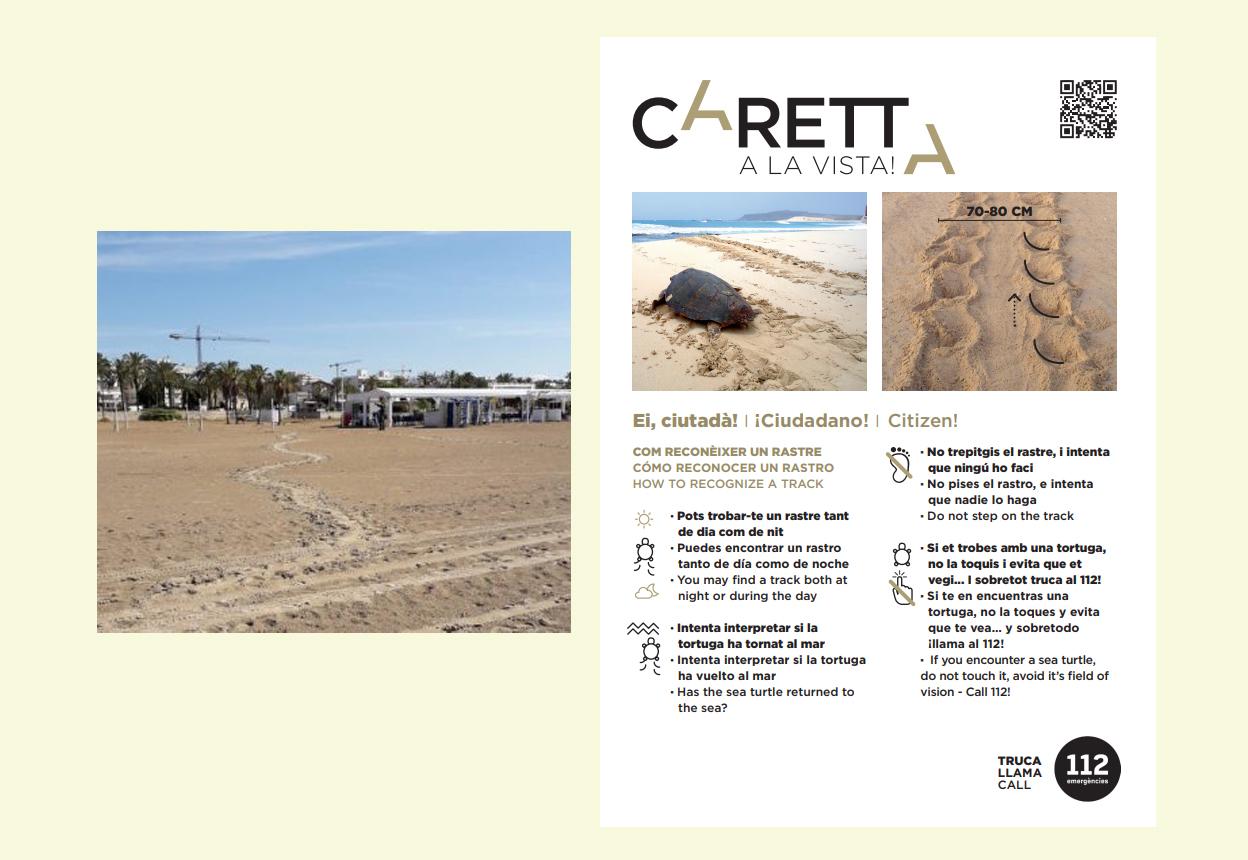 A la izquierda, el primer rastro de tortuga boba de la temporada en España. A la derecha, qué hacer si te encuentras un rastro.  Imagen: Caretta a la Vista!