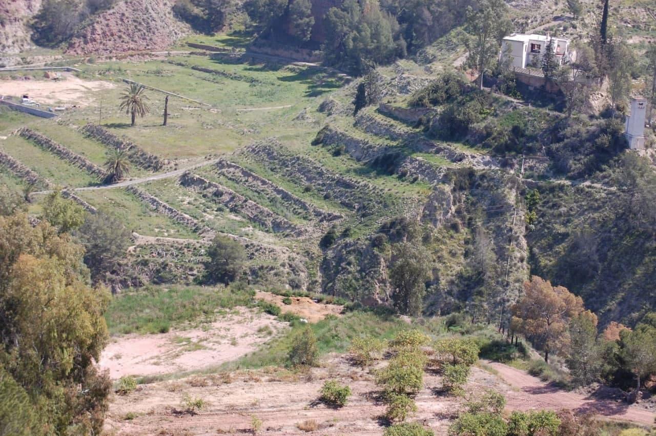 El cerro abancalado del Puntarrón Chico. Imagen: Huermur