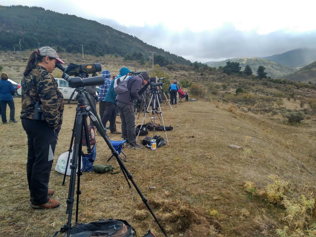 Punto de observación a larga distancia de los buitres negros liberados en la Sierra de la Demanda. Imagen: Grefa