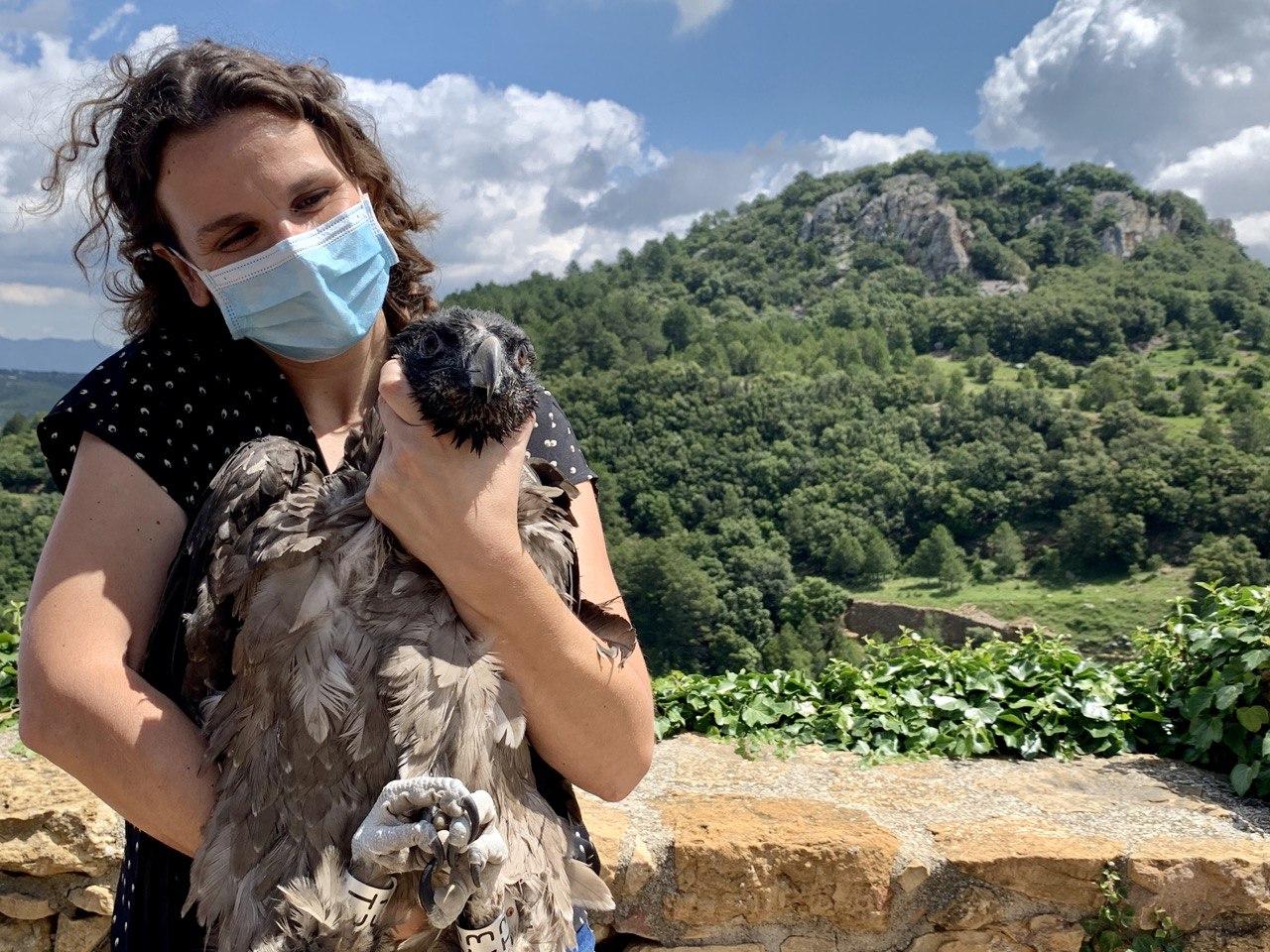 La secretaria autonómica de Emergencia Climática y Transición Ecológica, Paula Tuzón, ha participado en la liberación de dos crías de quebrantahuesos en el parque natural de la Tinença de Benifassà (Castellón). Imagen: Comunidad Valenciana