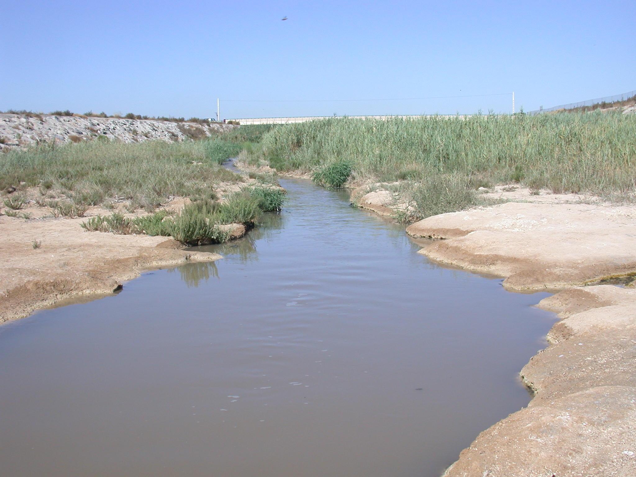 Rambla de Albujón, que ha aumentado su salinidad por efecto del vertido de las desalobradoras. Imagen: UMU
