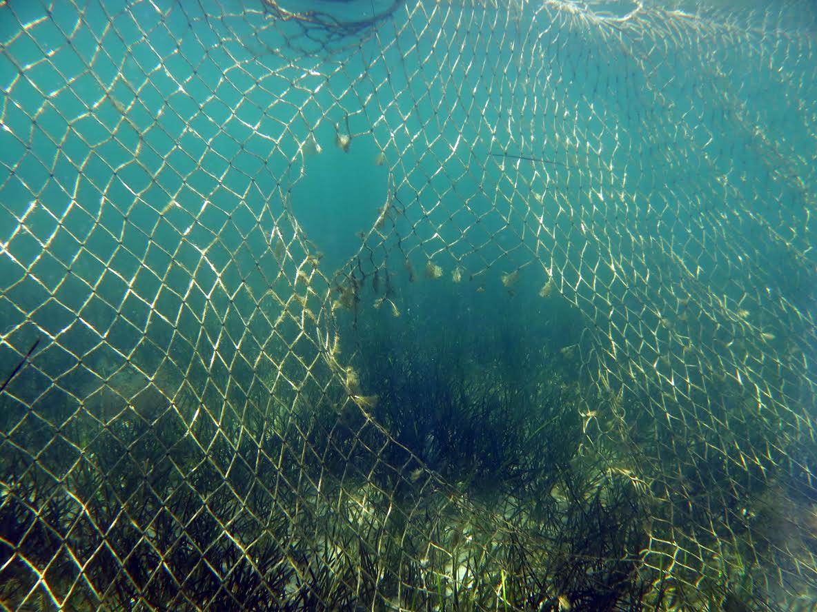 Una red antimedusa recién instalada en el Mar Menor, ya rota. Imagen: Pacto por el Mar Menor