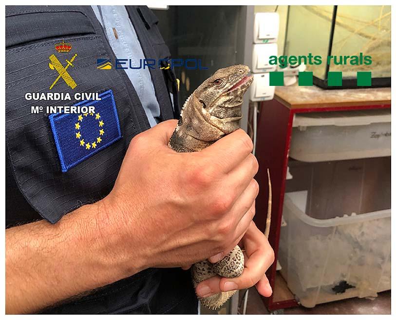 Una red de veterinarios proporcionaría documentación falsa. Imagen: GC