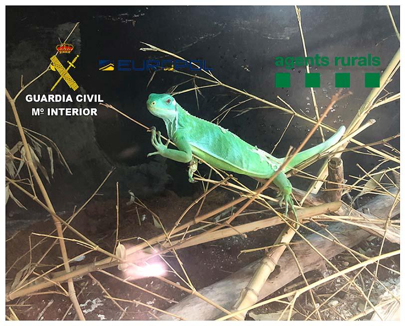 Los traficantes extraían animales de su entorno natural. Imagen: GC