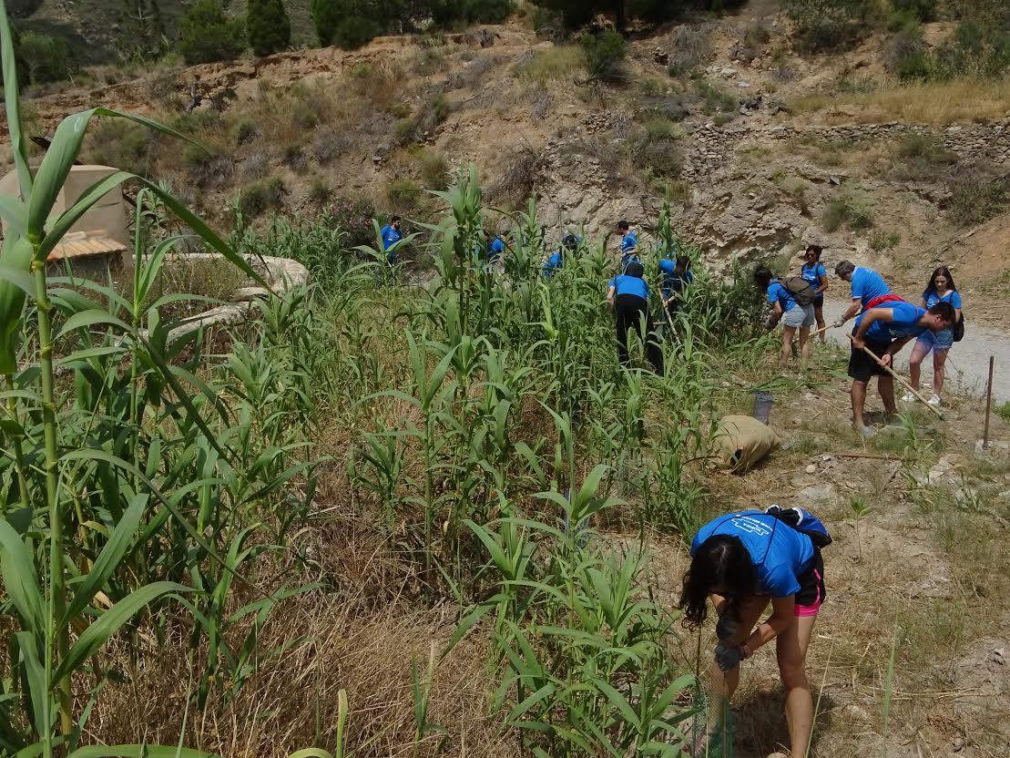 Un momento de los trabajos de voluntariado desarrollados el pasado jueves. Imagen: P.García / ANSE