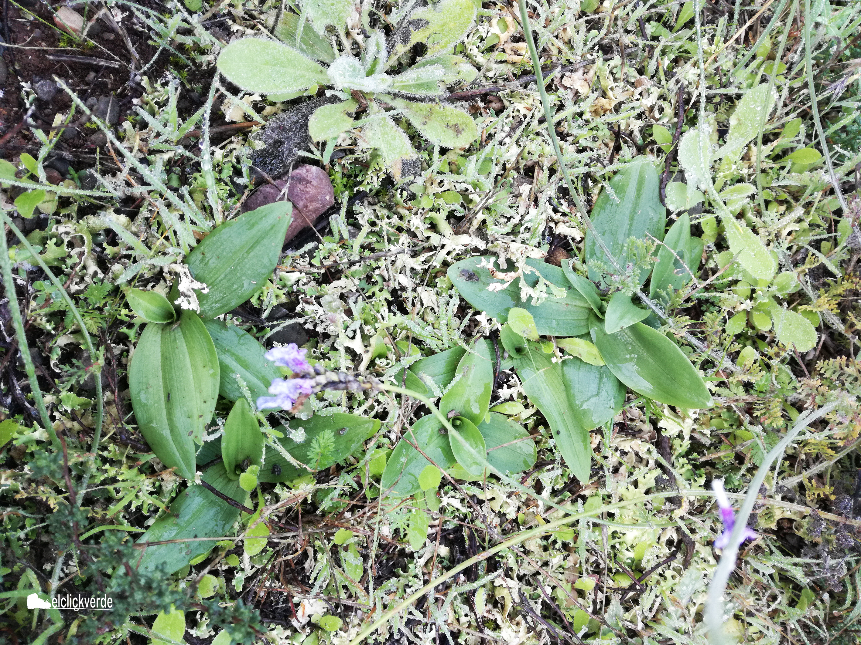 Cuento hasta 7 orquídeas. ¿veis la misma cantidad vosotros? Imagen: elclickverde