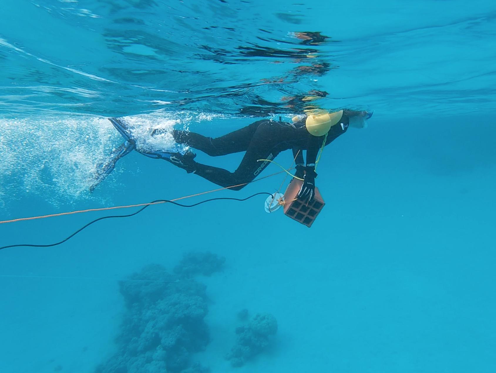 Trabajo de campo con un altavoz acuático en el Mar Rojo. Imagen: Michelle Havlik / CSIC
