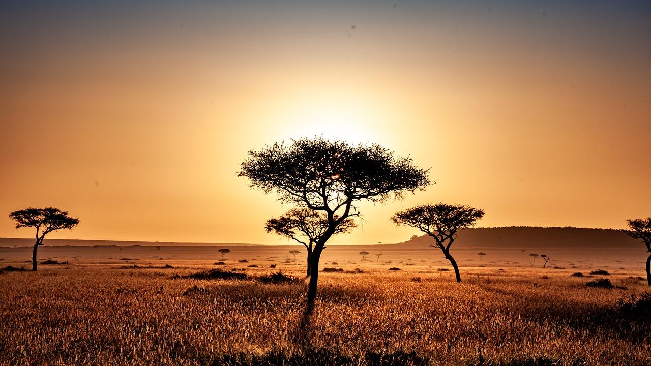 Una plantación masiva de árboles en pastizales y sabanas, aparte de los problemas para la biodiversidad, generaría unos paisajes muy homogéneos e inflamables. Imagen: Pixabay