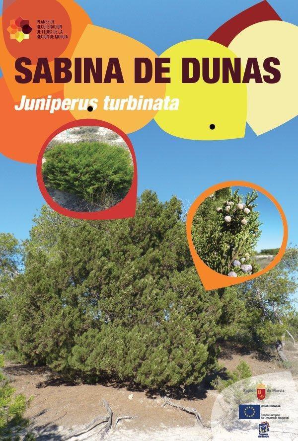 Vallado temporal de parte del sabinar en el Parque Regional Salinas de San Pedro