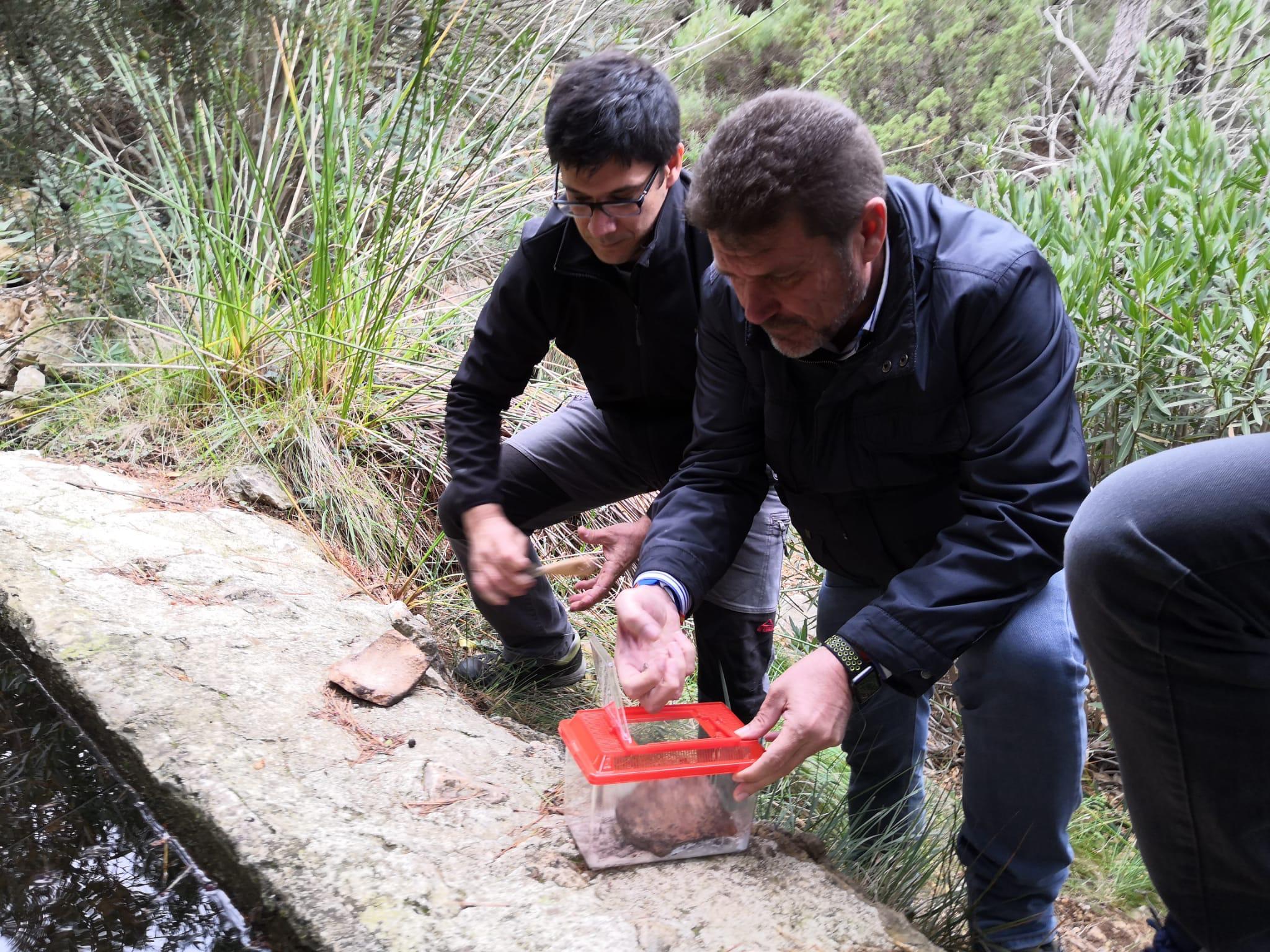 Un momento de la liberación de los ejemplares de sapo partero bético. Imagen: CARM