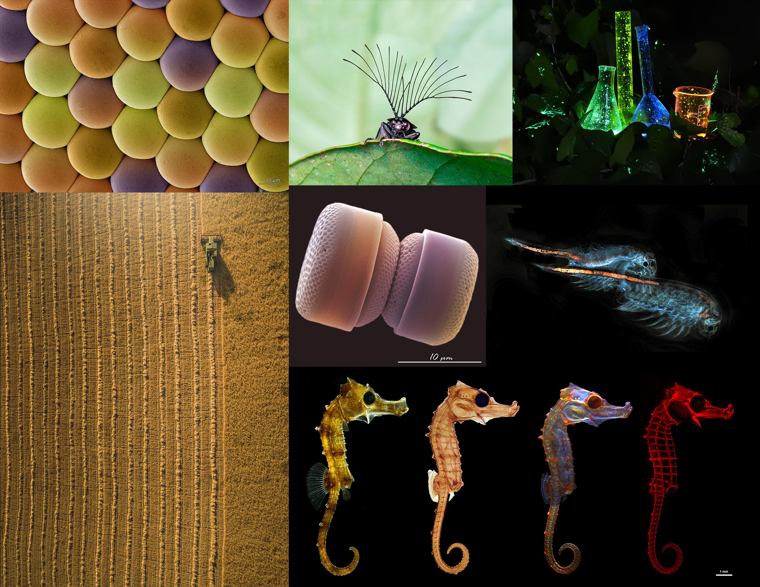 Las siete capturas seleccionadas. Imagen cedida por el CSIC / Fotociencia