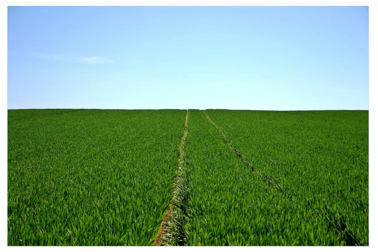 Un cultivo de cereales. Imagen: Pixabay