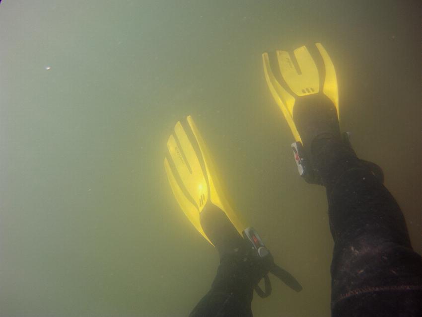Sopa verde en el Mar Menor. Imagen tomada a unos 1,5 metros de profundidad, el 1 de abril, por Adrián Aguilar