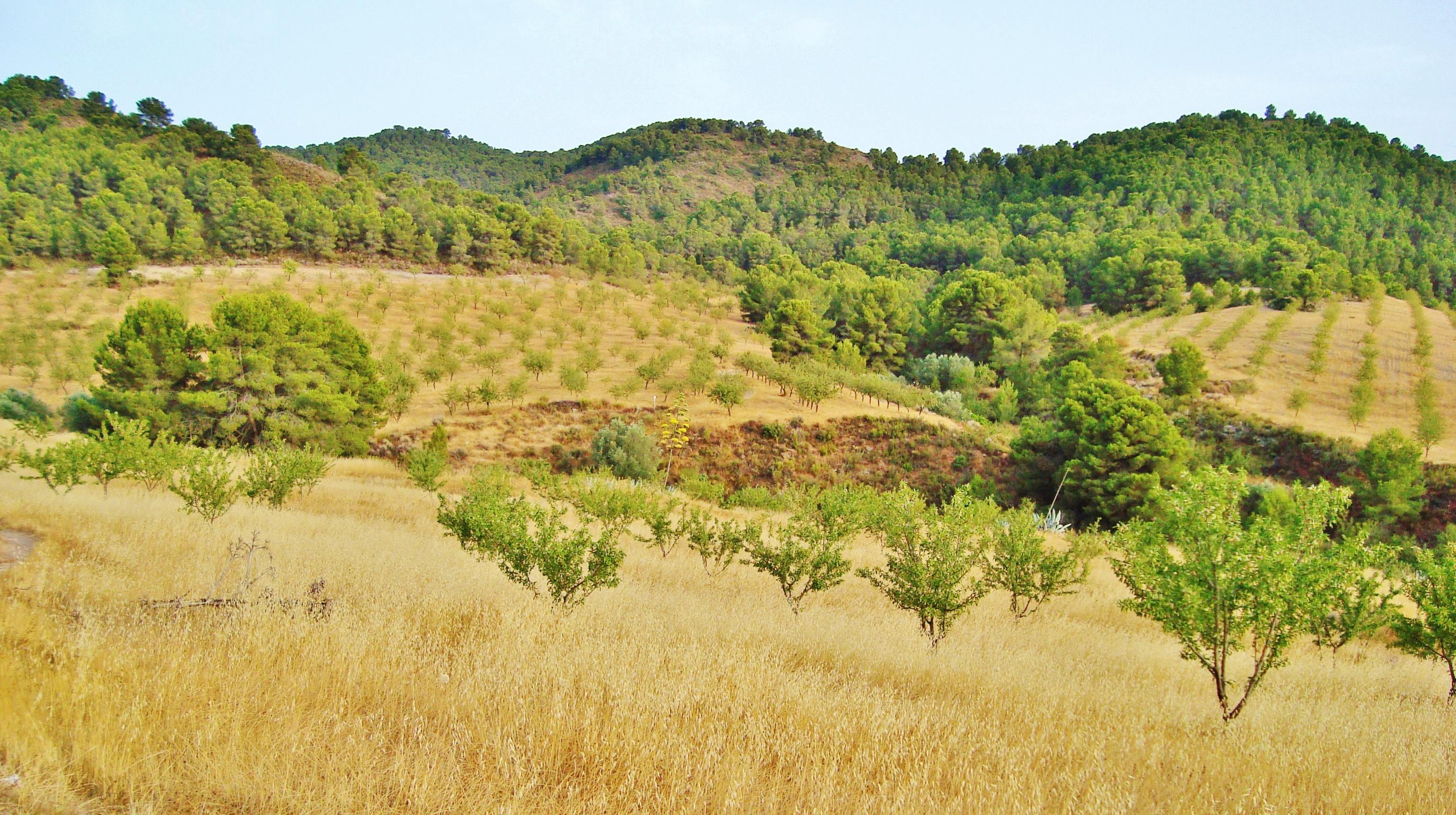 Paisaje de la zona del madroñal en la sierra de Almenara. Imagen: Acude