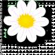 Rutas botánicas, clases y otras actividades relacionadas con la botánica