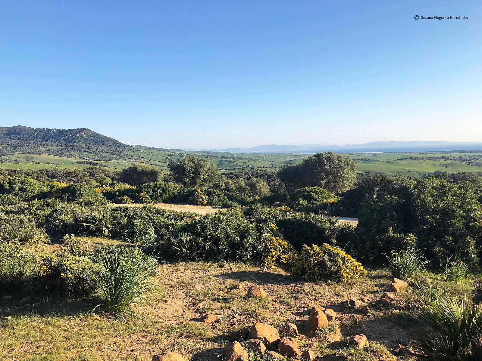 Vistas del Estrecho desde el parque natural de los Alcornocales. Imagen: Susana Noguera