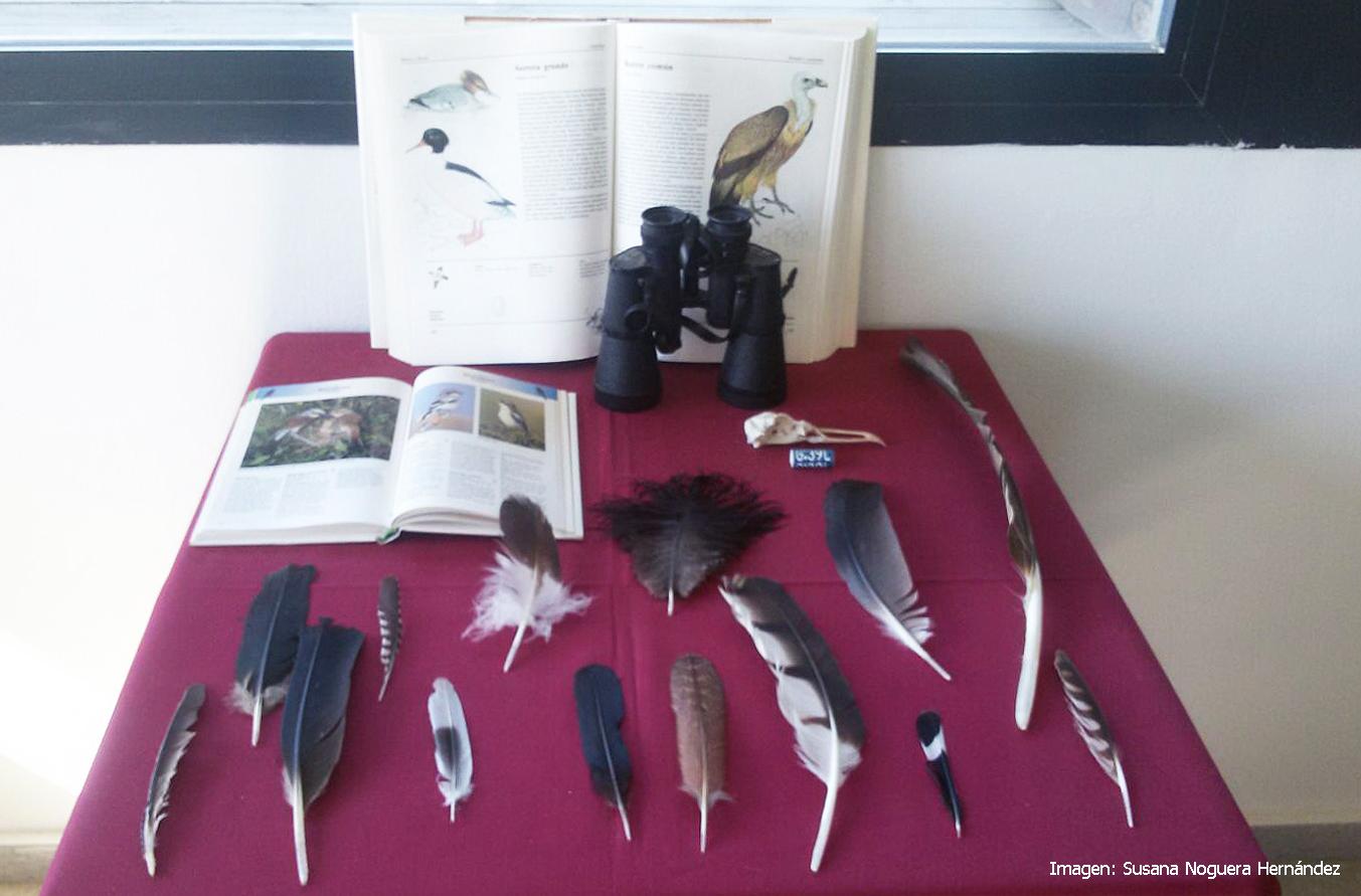 Exposición  'La migración soñada', del fotógrafo de naturaleza Fernando Barrios, en el observatorio de Cazalla. Imagen: Susana Noguera Hernández