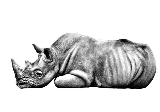 Sudán, el último rinoceronte macho, de Larissa Ribeiro Lourenço Fernandes, ganadora del premio especial del público. Imagen: MNCN