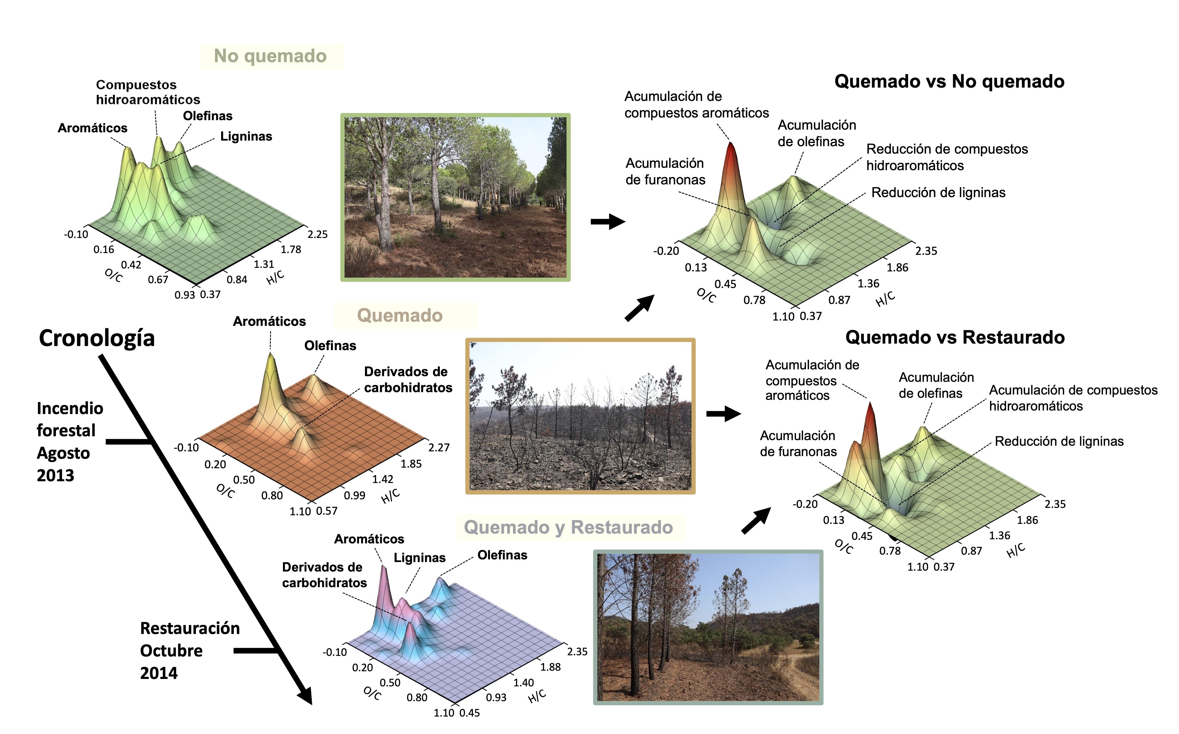 Efectos del fuego y de las prácticas de restauración del bosque en la composición molecular de la materia orgánica del suelo. Imagen: MNCN