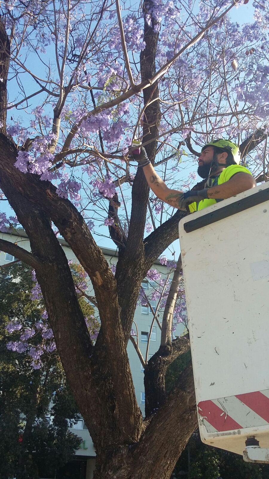 Un operario, instalando una caja de larvas de insectos para la lucha biológica. Imagen: Ayto. de Murcia