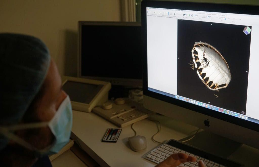 Ecografía practicada a la tortuga 500 en la veterinaria del Oceanografic. Imagen: Fundación Oceanogràfic