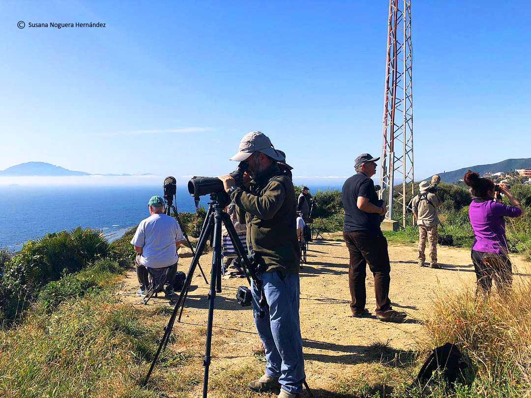 Hay mucha gente interesada en la migración en el extremo sur de la Península. Imagen: susana Noguera