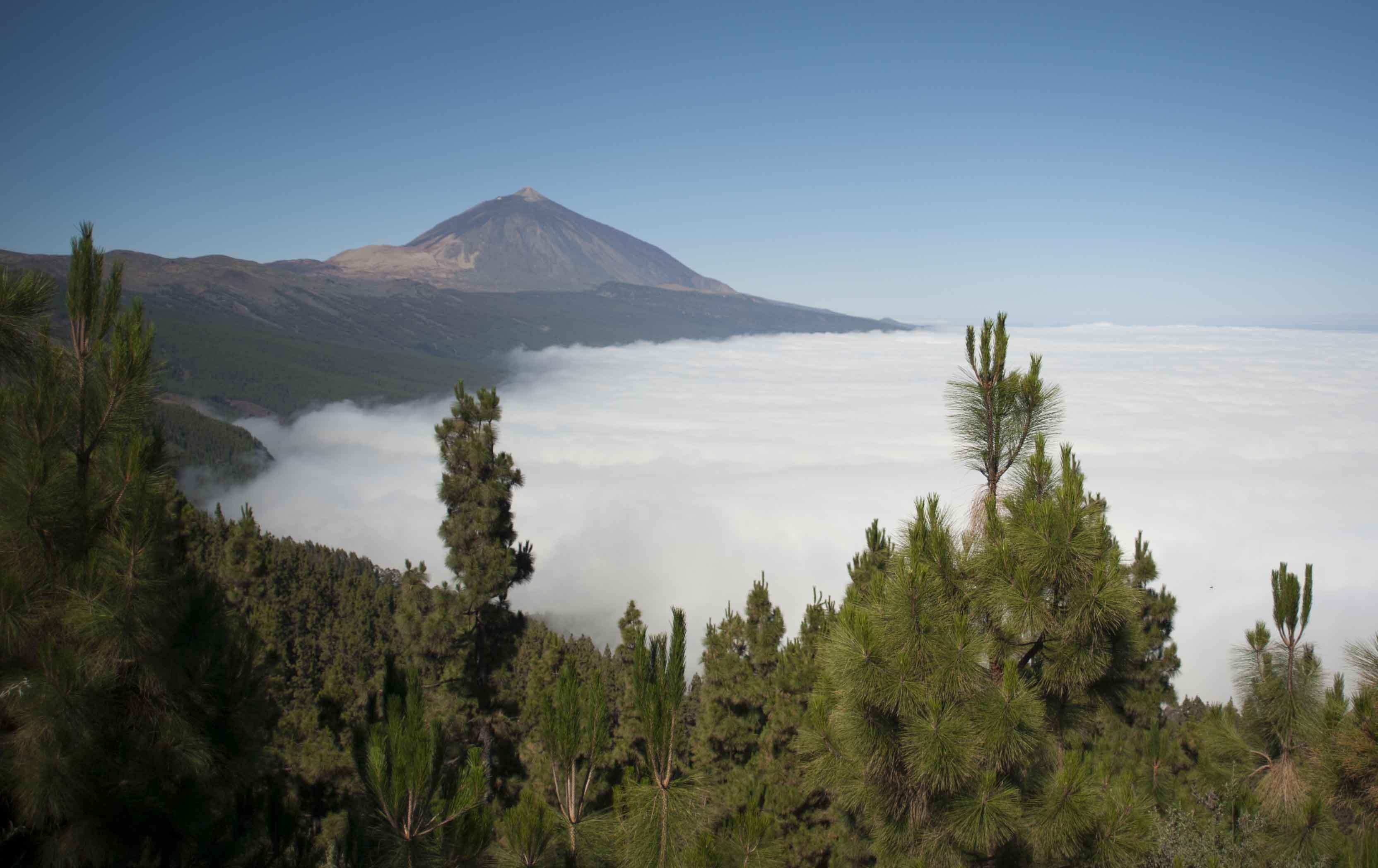 Parque Nacional del Teide, en la isla canaria de Tenerife. Imagen: María González / CSIC Comunicación