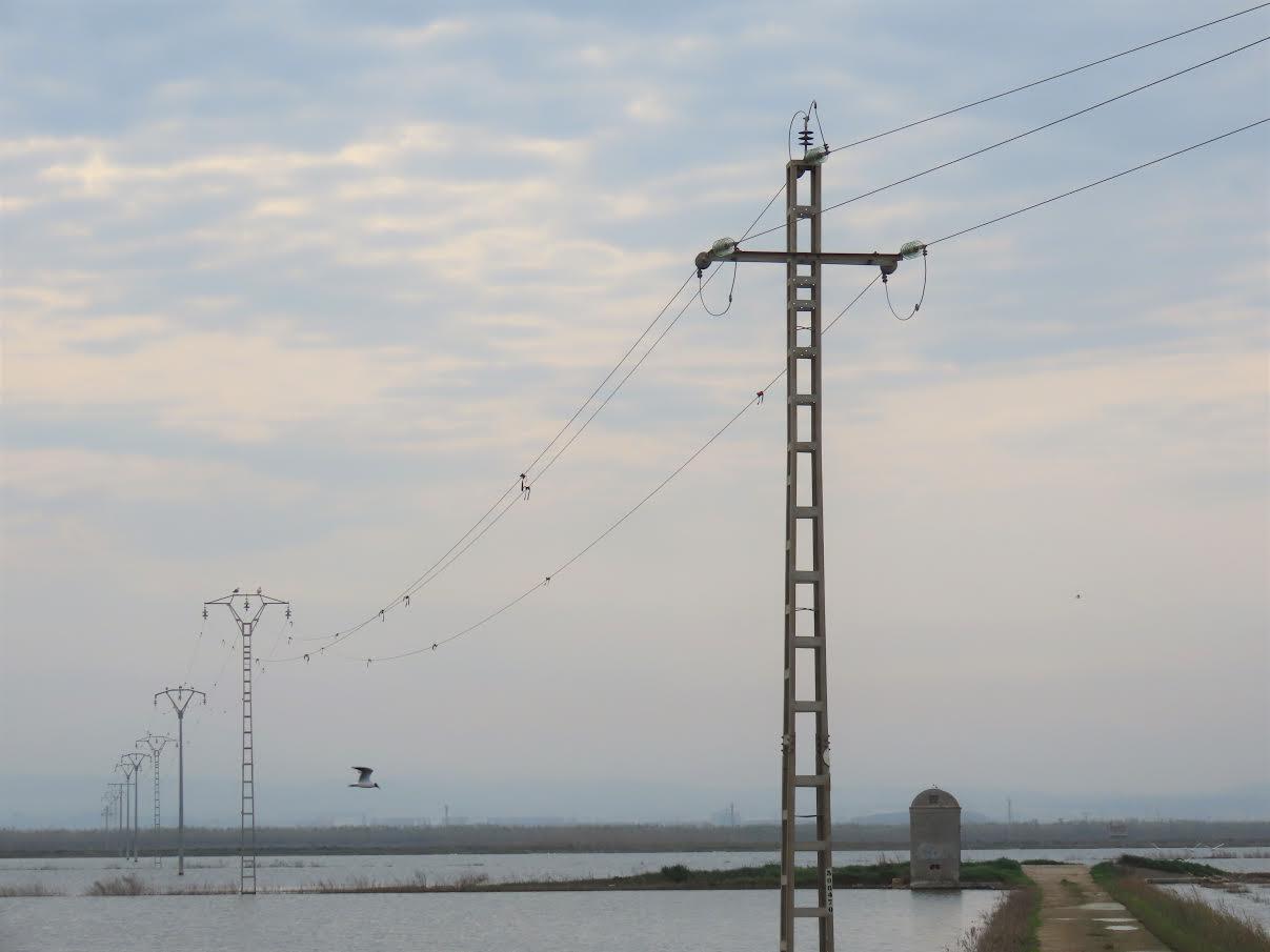 Tendido eléctrico sin medidas para evitar electrocuciones de avifauna. Imagen: Adensva