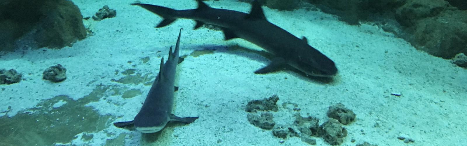 Fotografía de archivo del Aquarium. Imagen: UMU