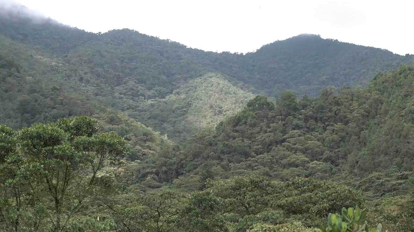 Paisajes de la Reserva Forestal Protectora Regional Alto de San Miguel. Gobierno de Corantioquia