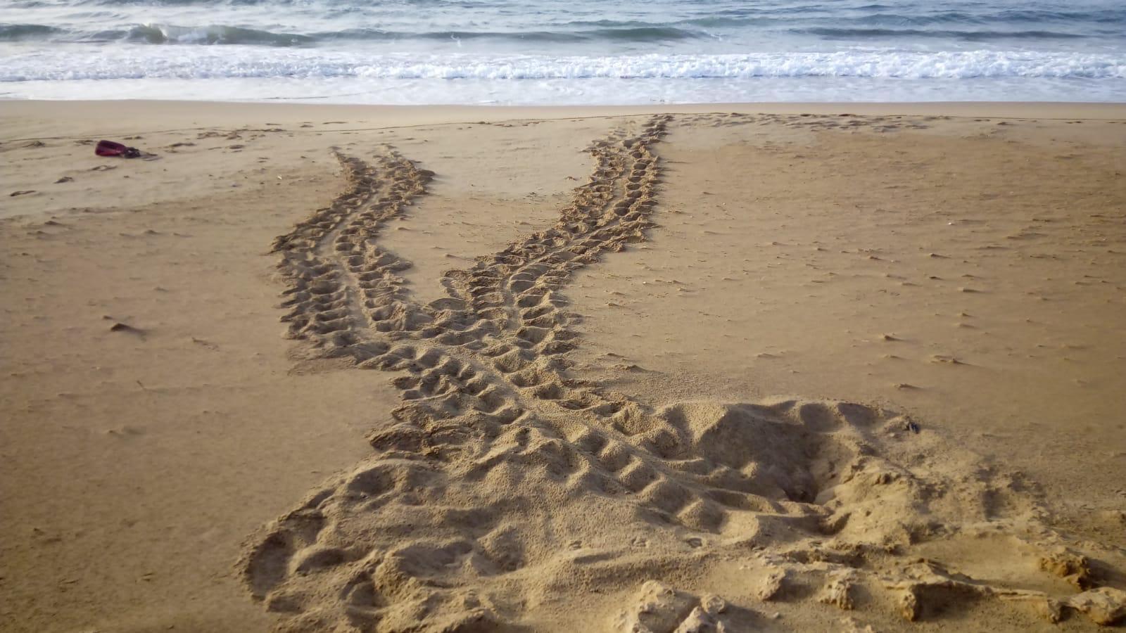 Rastro completo de ida y vuelta al mar. Imagen: CARM