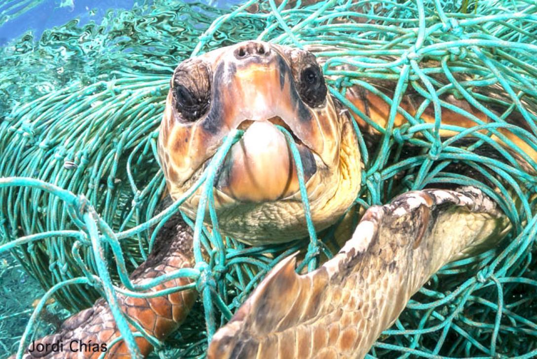 Impactante imagen de la campaña Naturaleza sin Plásticos de WWF. Imagen: Jordi Chías / WWF