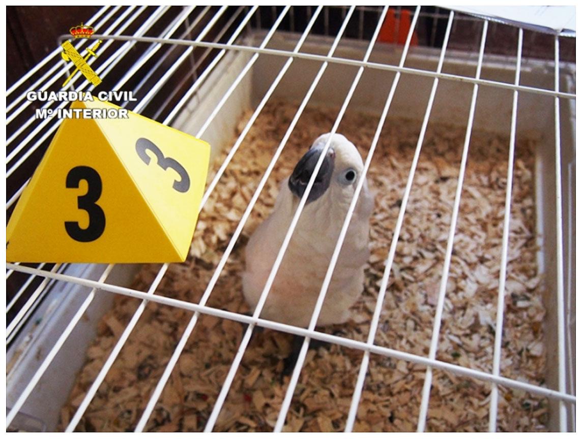 Un veterinario colegiado cumplimentaba irregularmente las cartillas sanitarias para animales exóticos. Imagen: Seprona