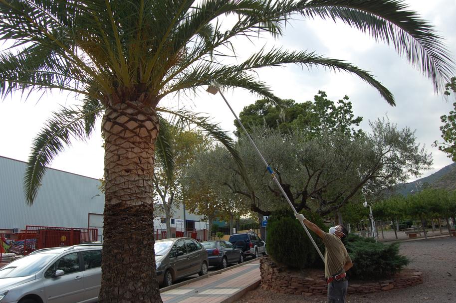 Tratamiento del picudo rojo con un hongo. Univ. de Alicante
