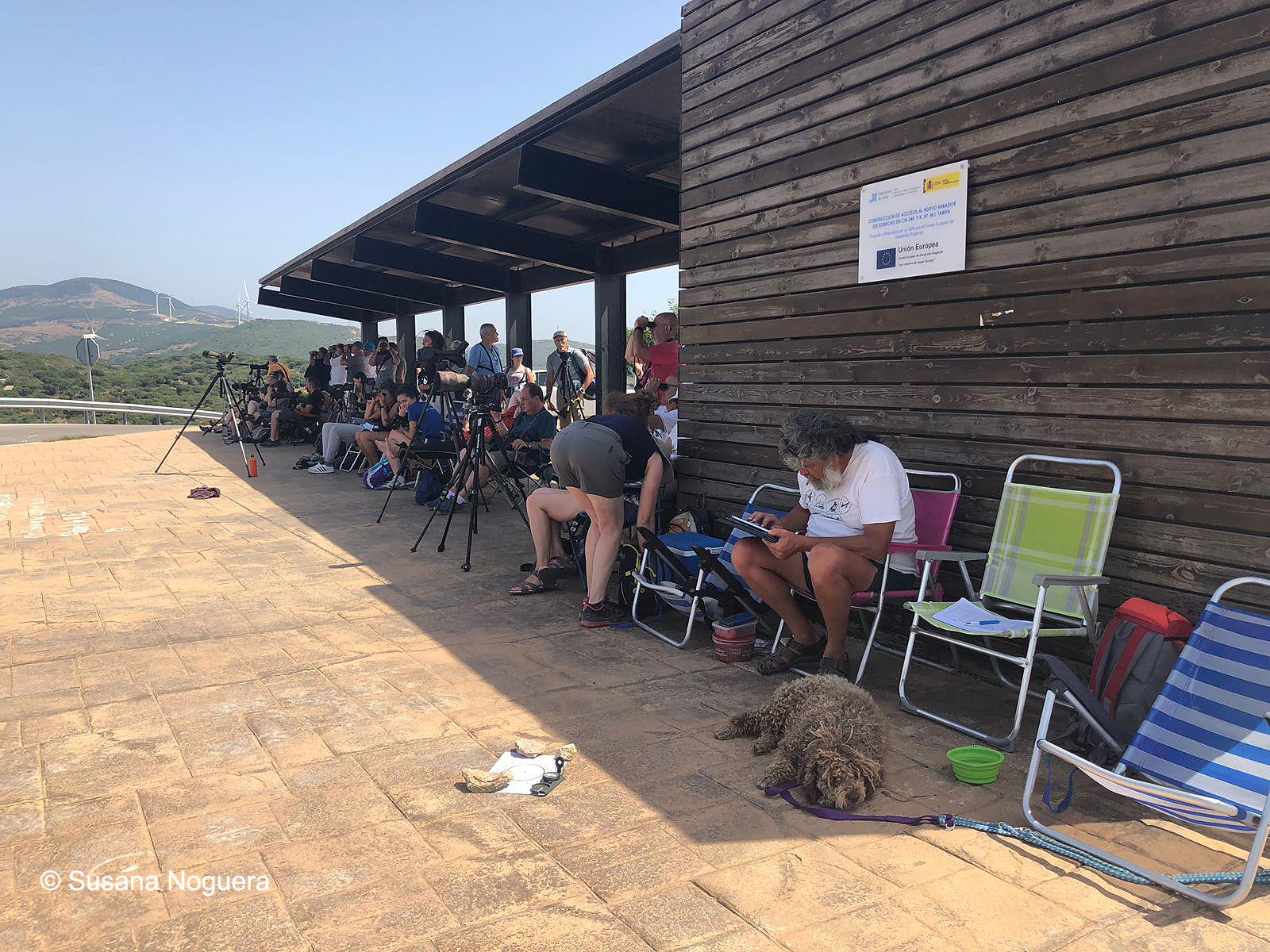 Voluntarios y turistas ornitológicos se mezclan en los observatorios de Tarifa. Imagen: Susana Noguera