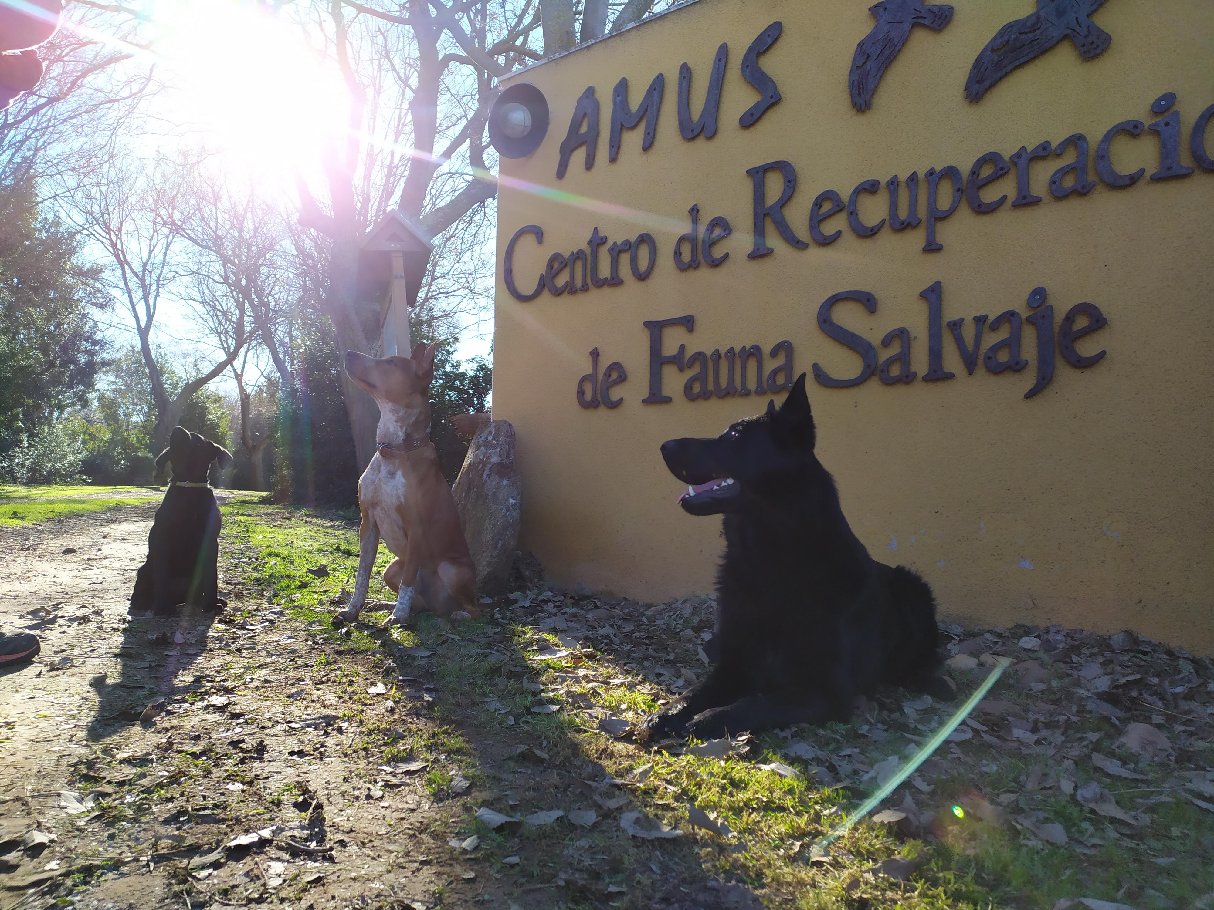 Unida canina de AMUS conformada por estos tres perros que han superado un escrupuloso proceso de selección. Imagen: Amus